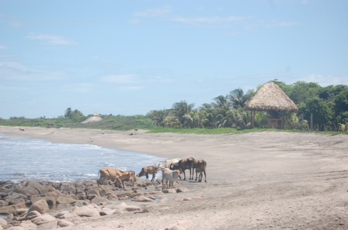 Beautiful stretches of Nicaraguan coastline